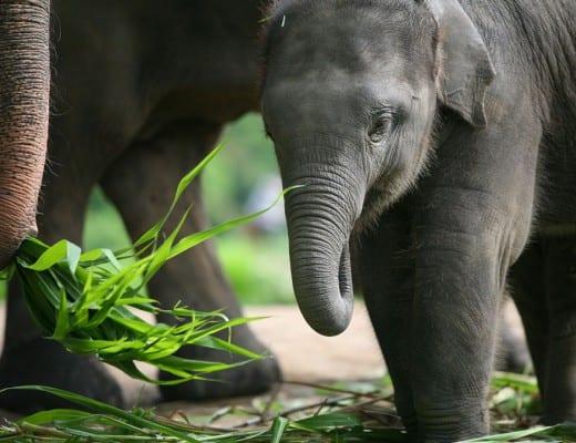 Patara-Elephant-Farm-in-Chiang-Mai