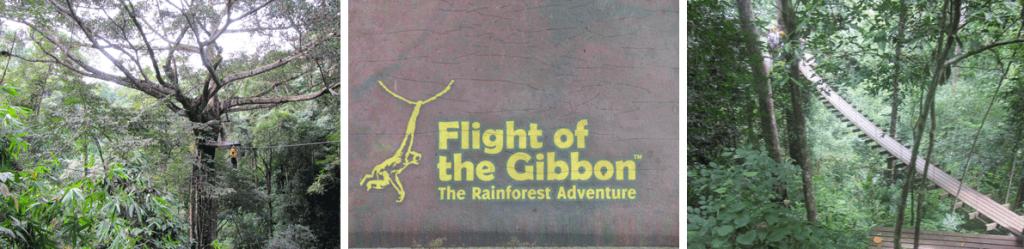 chiang mai flight of the gibbon