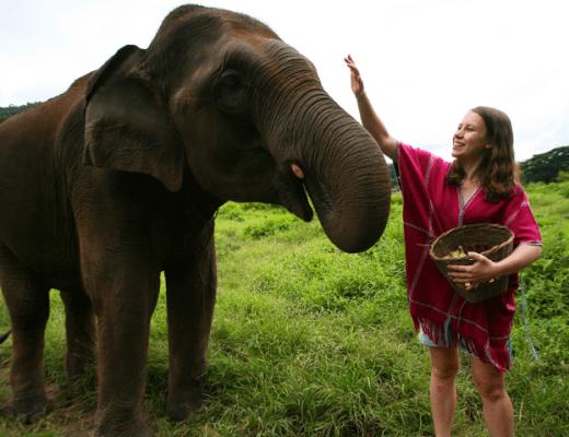 olifant eten geven