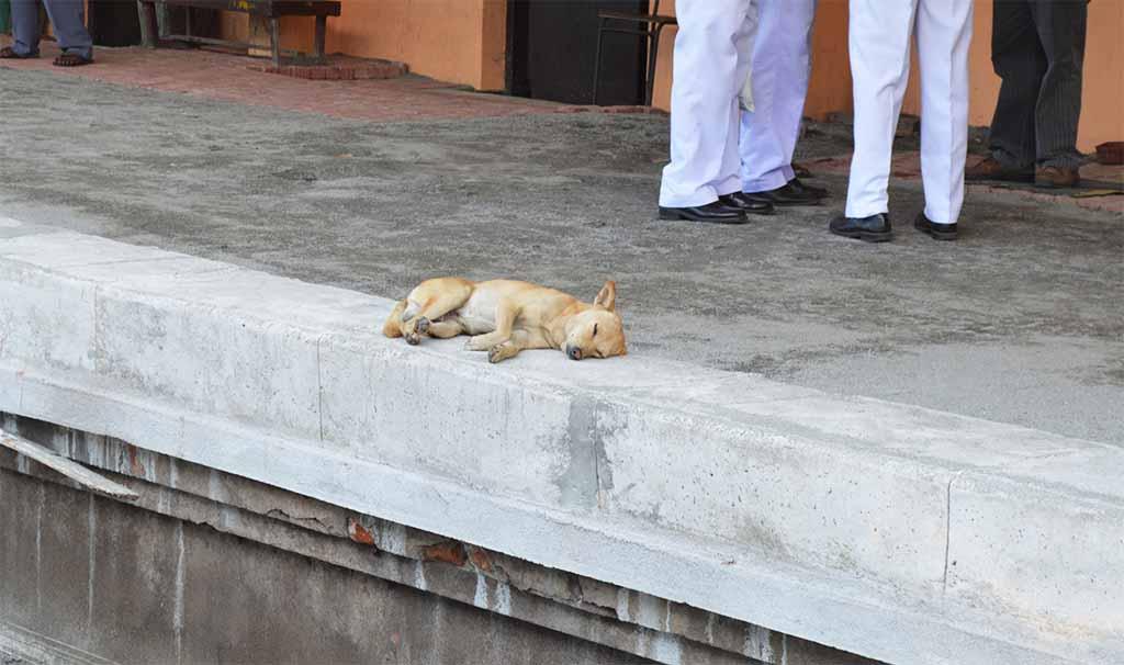 hond in sri lanka