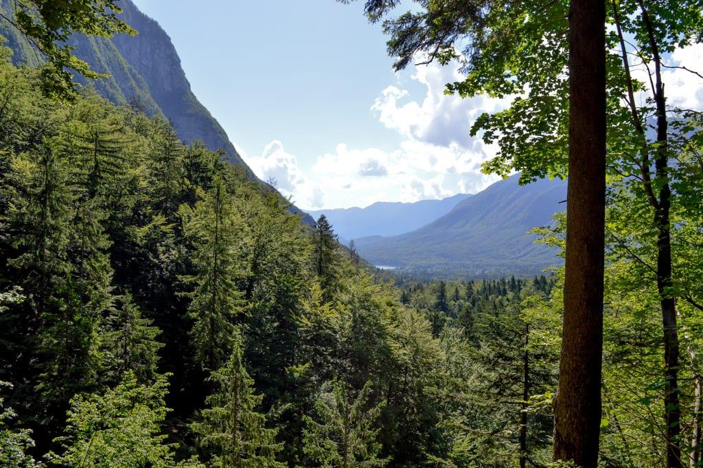 Natuur in Bohinj