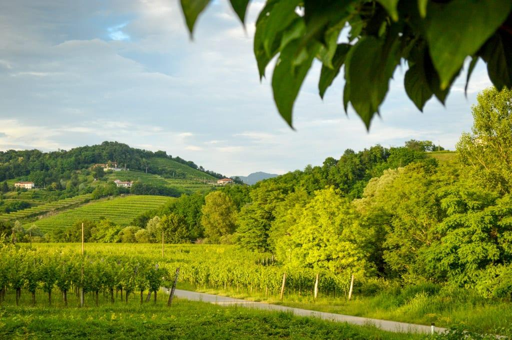 Wijnvelden in Brda