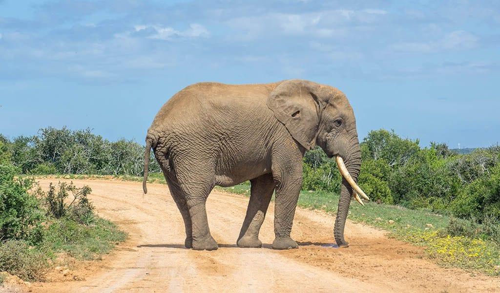 Garden Route Zuid-Afrika - Addo Elephant Park