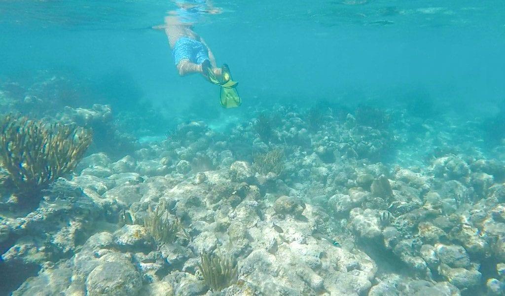 Akumal zeeschildpad snorkelen