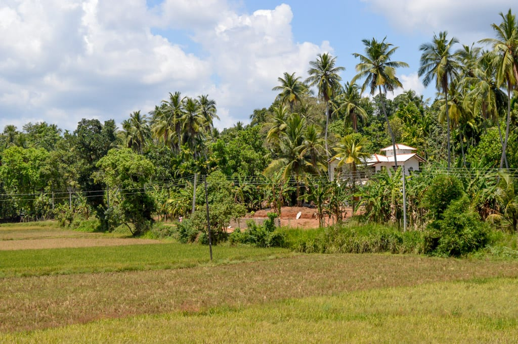 Natuur op Sri Lanka