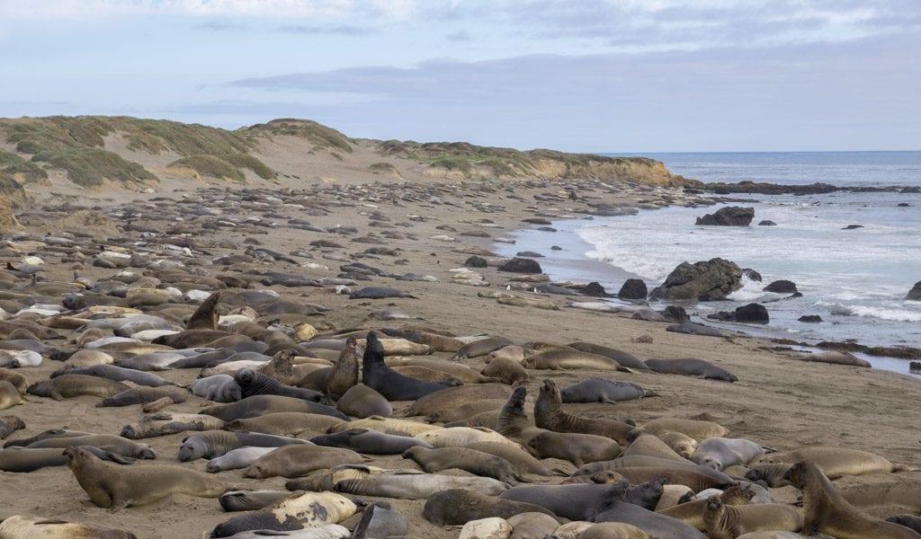 Highway 1 - Elephant Seal Rockery