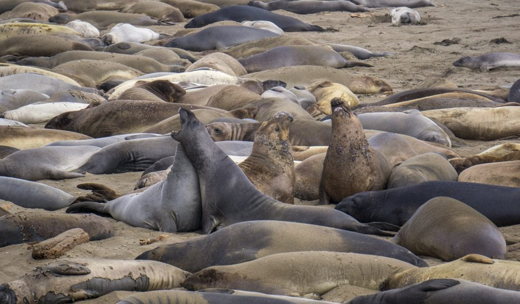 Highway 1 - Elephant Seal Rockery