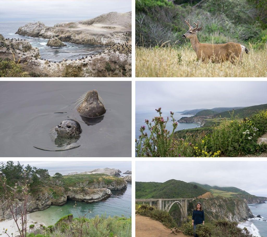 Rondreis West-Amerika - Point Lobos & Bixby Bridge