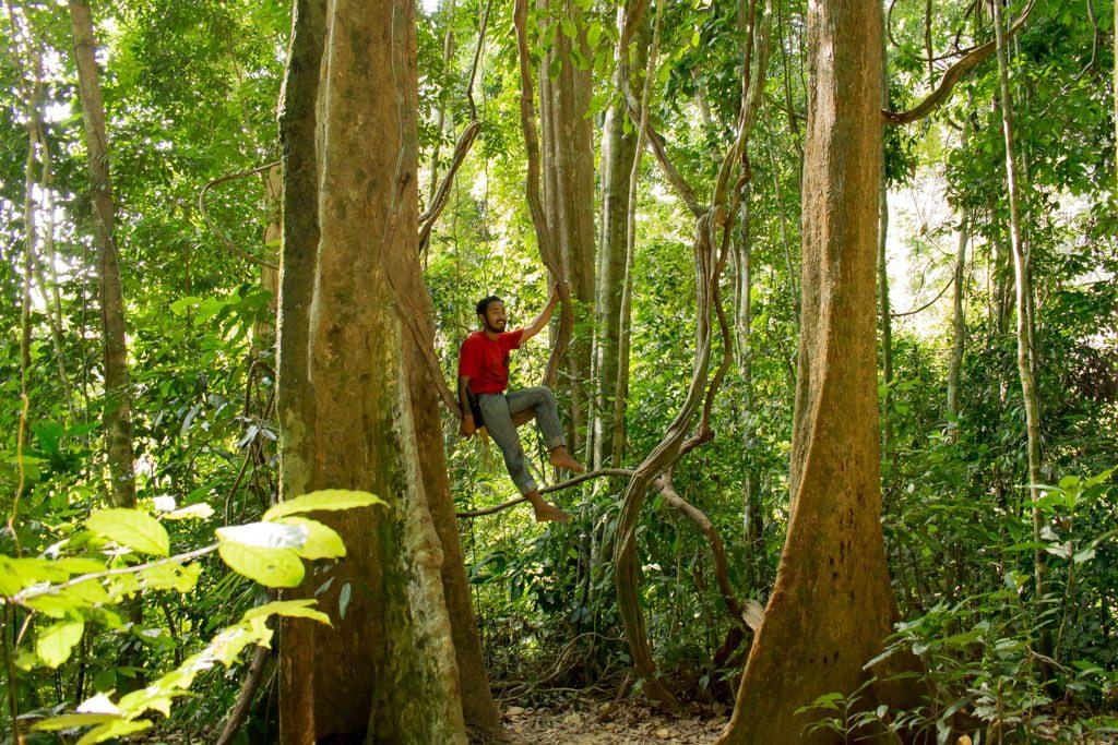 Jungle van Khao Sok
