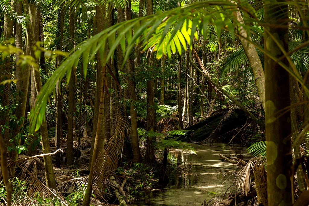 Jungle op Fraser Island