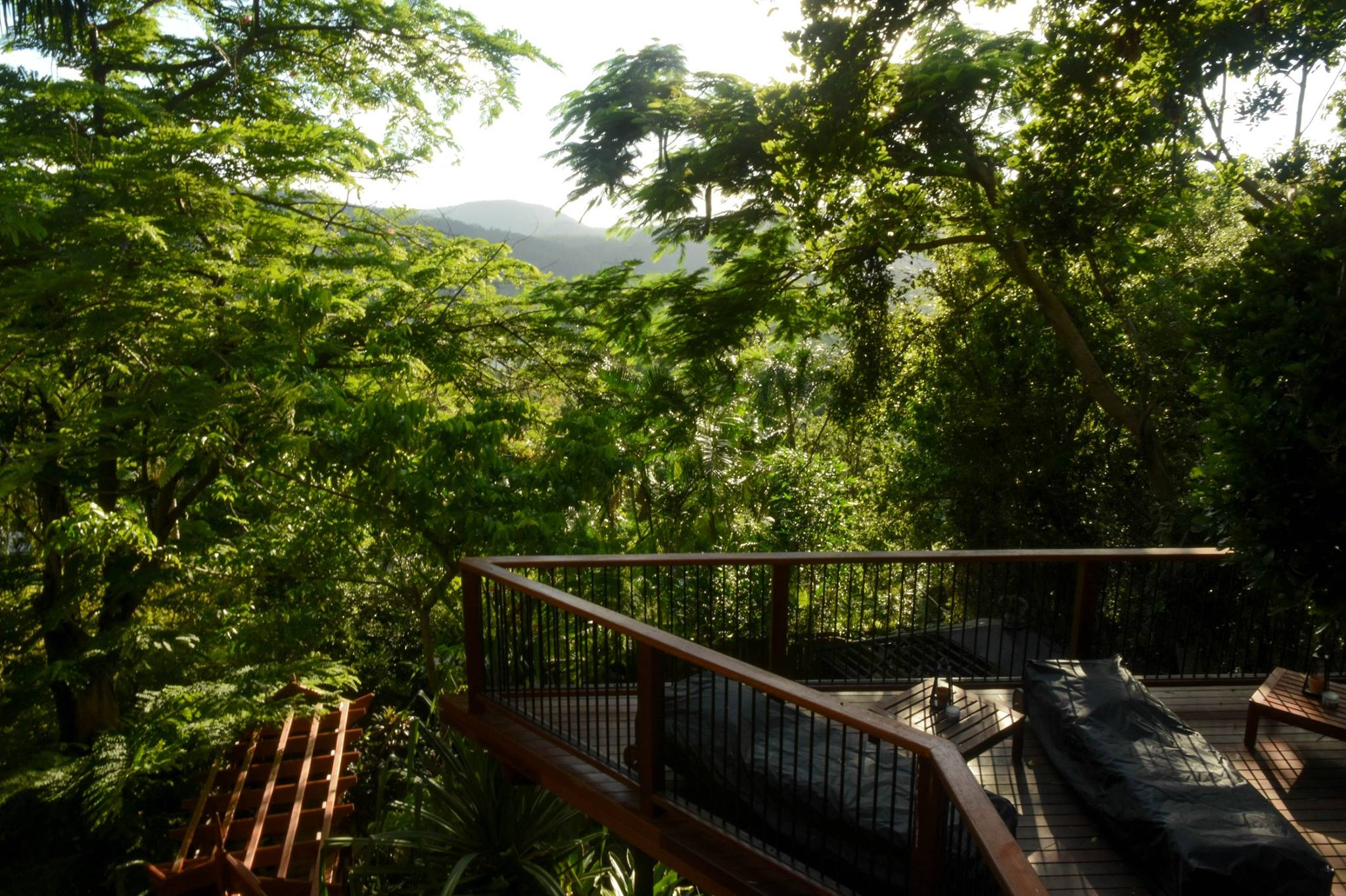 Jungle bij Whitsundays BNB Retreat